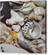 She Sells Seashells Acrylic Print