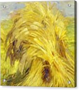 Sheaf Of Grain 1907 Acrylic Print