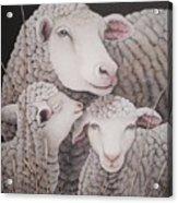 Sheep Ahoy Acrylic Print