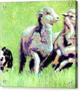 Sheep And Dog Acrylic Print