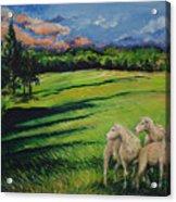 Sheep At Dusk Acrylic Print