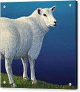 Sheep At The Edge Acrylic Print