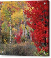 Sheep Canyon In Autumn Acrylic Print