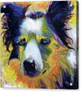 Sheep Dog Acrylic Print