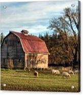 Sheep Farm Acrylic Print