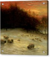Sheep In A Winter Landscape Evening Acrylic Print