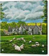 Sheep In Repose Acrylic Print