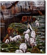 Sheep In The Mountains  Acrylic Print