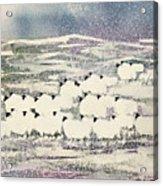 Sheep In Winter Acrylic Print