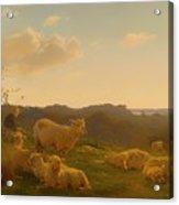 Sheep On A Hill Near Skarridso Acrylic Print