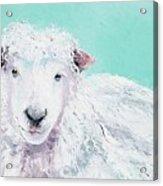 Sheep Painting - Jeremiah Acrylic Print