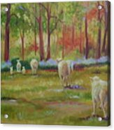 Sheeple Acrylic Print