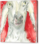 Sheeps Are Not Always Kind .... Acrylic Print