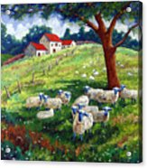 Sheeps In A Field Acrylic Print