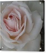 Sheer Bliss Rose Acrylic Print