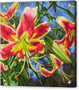 Sheherazade Lilies 1 Acrylic Print