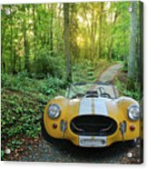 Shelby Ac Cobra In The Woods Acrylic Print