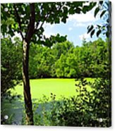 Sheldon Marsh Algae Pond Acrylic Print