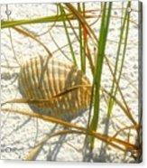 Shell And Beach Acrylic Print
