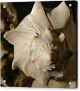 Shell And Driftwood Acrylic Print