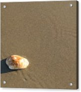 Shell And Waves Part 1 Acrylic Print