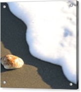 Shell And Waves Part 3 Acrylic Print