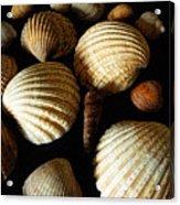 Shell Art - D Acrylic Print