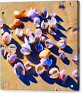 Shell Collection Acrylic Print