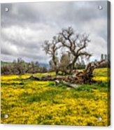 Shell Creek Awash In Yellow Acrylic Print