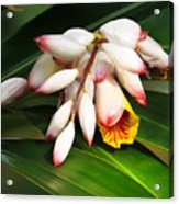 Shell Ginger Flowers Acrylic Print