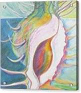 Shell Metamorphosis Acrylic Print
