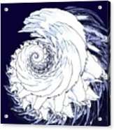 Shell No. 2 Acrylic Print