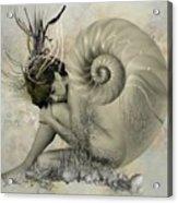 Shell Of Life  Acrylic Print