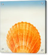 Shell On Beach Acrylic Print