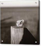 Shell On Post Acrylic Print