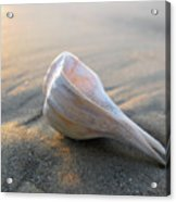 Shell On The Beach Acrylic Print