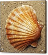 Shell On The Sand Acrylic Print