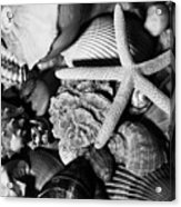 Shells And Starfish In Black And White Acrylic Print