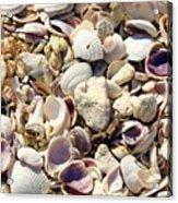 Shells Aplenty Acrylic Print