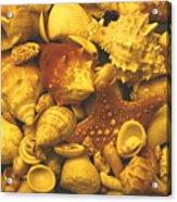 Shells Acrylic Print