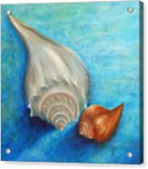 Shells In Blue Acrylic Print