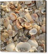 Shells On Beach Acrylic Print