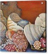 Shells On Shelf Acrylic Print