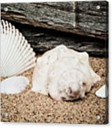 Shells On The Beach Acrylic Print