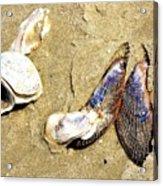 Shells On The Beach Of Jekyll Acrylic Print