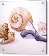 Shells Still Life Acrylic Print