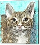 Shelter Cat Fantasy Art Acrylic Print