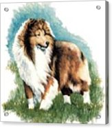 Sheltie Watch Acrylic Print by Kathleen Sepulveda