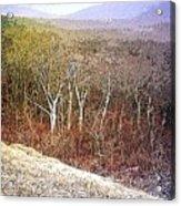 Shenandoah Wilderness Acrylic Print