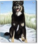 Shepherd Mix Timmy Acrylic Print